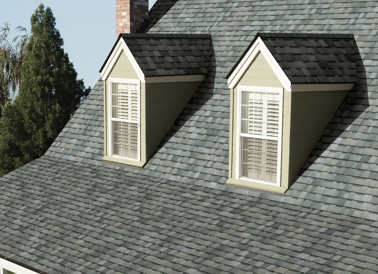 Big Dog Roofing Images